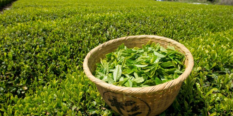 Green Tea – The Complete Guide
